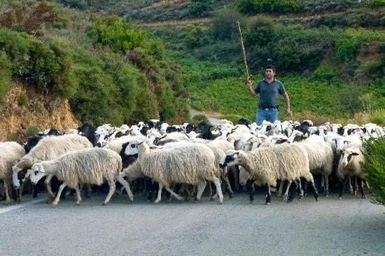 Lofos Village: Another road, another jam. Countryside south of Lofos/Chania