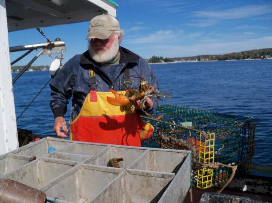 Lobster Boat Tour w/ Captain Clive Farrin: Capt Clive and the lobsters.