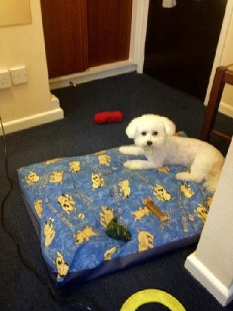 The Sandpiper Guest House: my dog oli enjoying his stay at the sandpiper