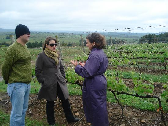 The Wine Experience: Winemaker explaining Viticultural Process