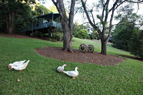 Montville Country Cabins : Beautiful lawns and friendly wildlife!