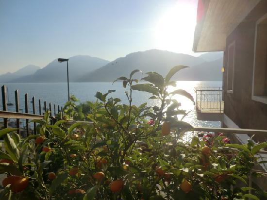Hotel Casa Sartori: agrumi