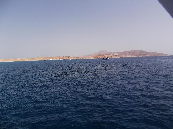 Sinai Safari Adventures : Tiran Island