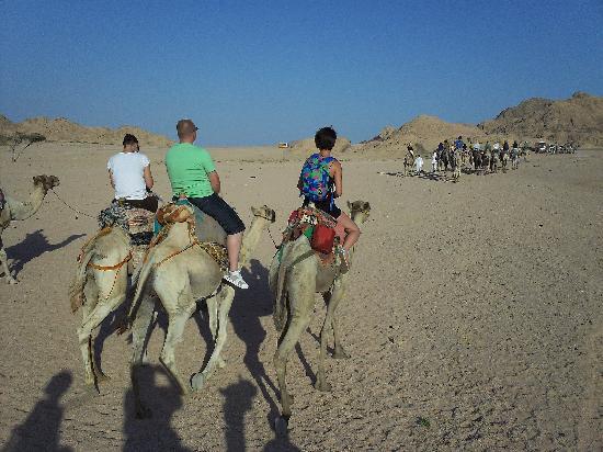 Sinai Safari Adventures : Camel Ride - Star Gazing