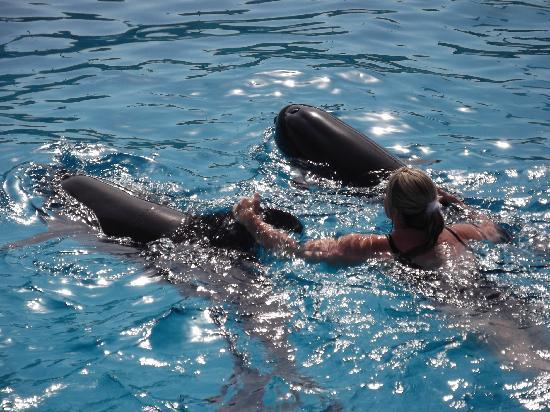 Sinai Safari Adventures : Dolphin Arena