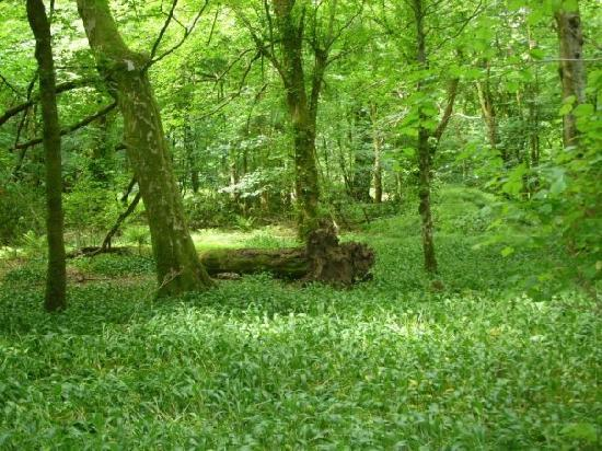 Home Farm Cottages: in the woods a world away