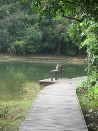 ‪MacRitchie Reservoir‬