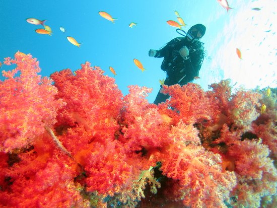 Emperor Divers Nuweiba - Day Tours