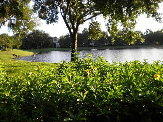 Holiday Inn Express Tampa-Brandon : Back yard