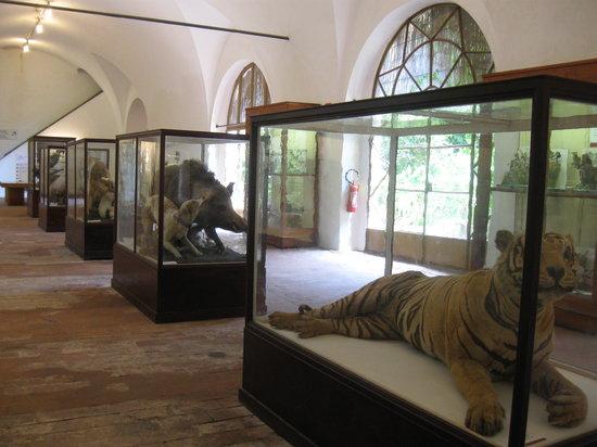 Museo di Storia Naturale - Universita di Pisa