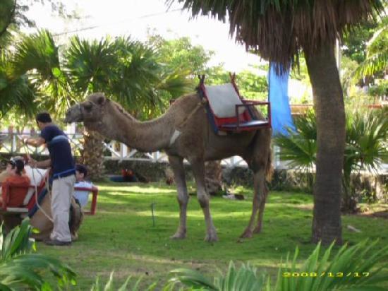 Varadero, Cuba: Dans le parc