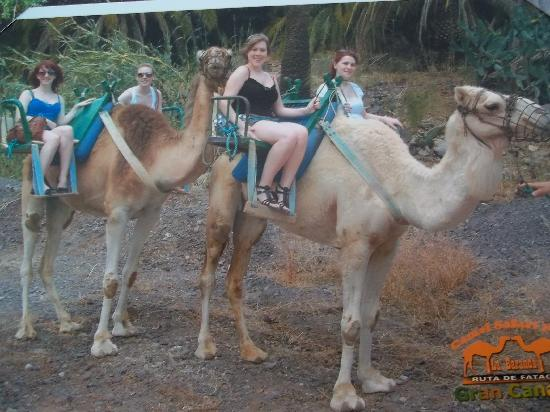 Animal Encounters -  Escape Outdoor & Adventures - Private Tours: Camel Ride