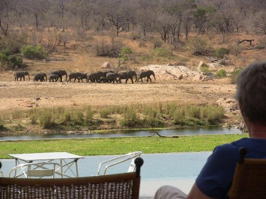 Mjejane River Lodge: The animals come to visit you!