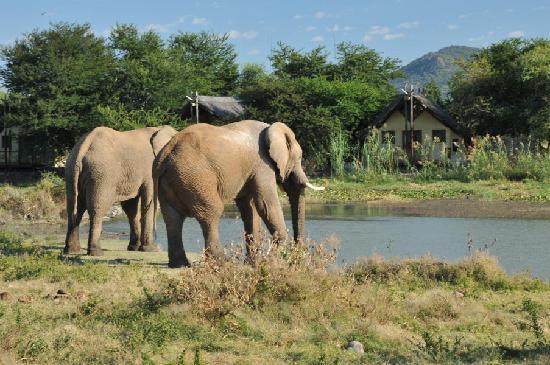 Tau Game Lodge: Chalets with Elephants