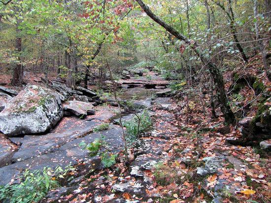 Petit Jean State Park: Creek on Cedar Falls Trail