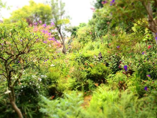giardini a Napier Lane