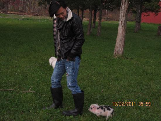 "The Kaaterskill: Piggy"" Victoria"" So so Cute !!"