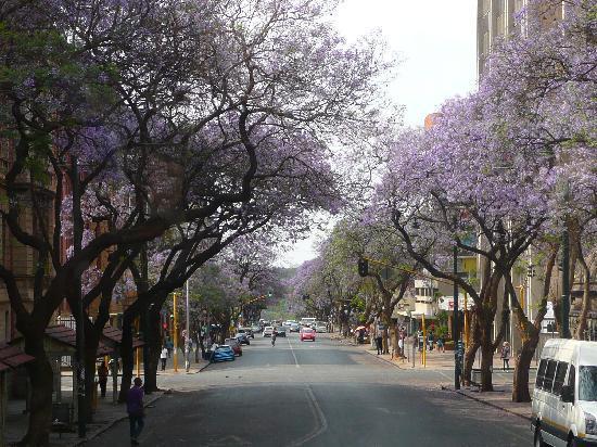 Garden Court Milpark: les avenues bordées de Jacarandas
