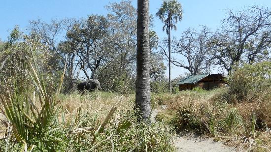 Delta Camp: capanna ed elefanti
