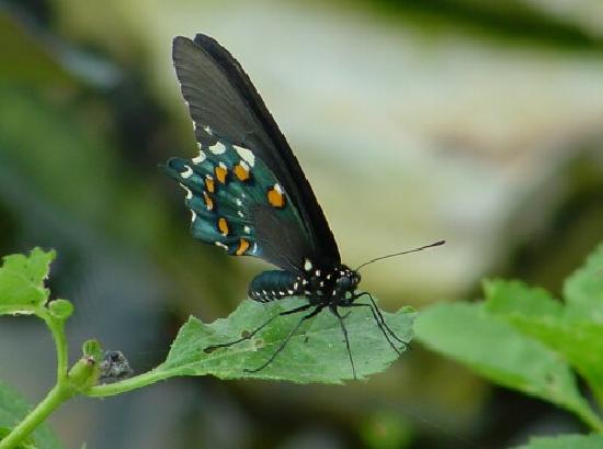 Butterfly Estates: More photography