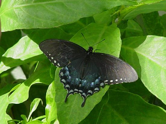 Butterfly Estates: Photography