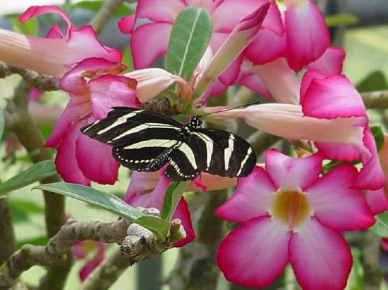 Butterfly Estates: More fun than you can stand!