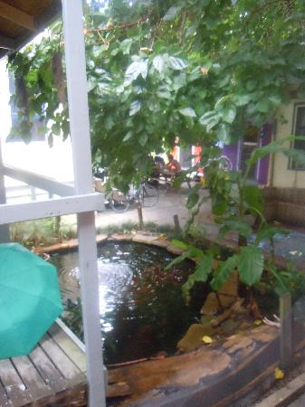 India House Hostel: The pond outside our dorm