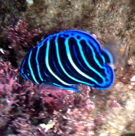 African Peninsula Guest House: Our tropical fish