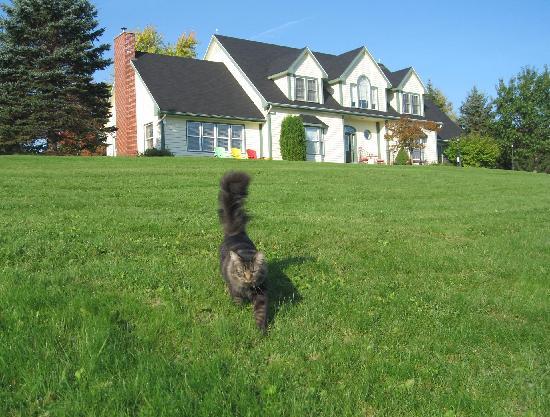 Tannaghtyn B & B: Ben guarding the estate