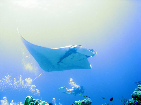 Diving with Dive Dimension and Mantas