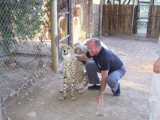 Cango Wildlife Ranch: My husband with Lex, the purring cheetah