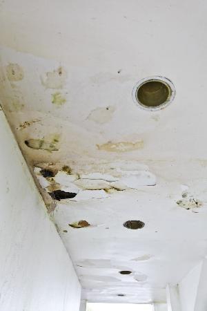 D'Coconut Hill Resort : mouldy & rotten
