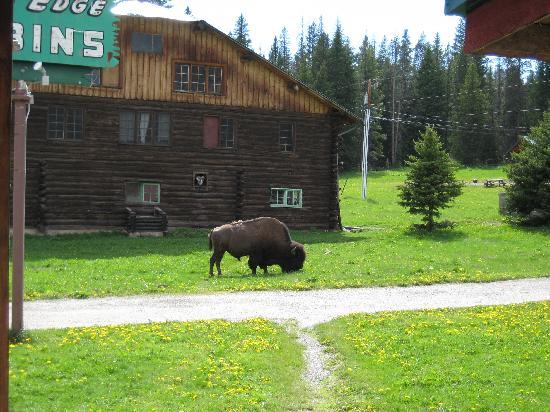 Silver Gate Cabins: A visitor