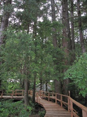 Clayoquot Wilderness Resort: Beautiful setting