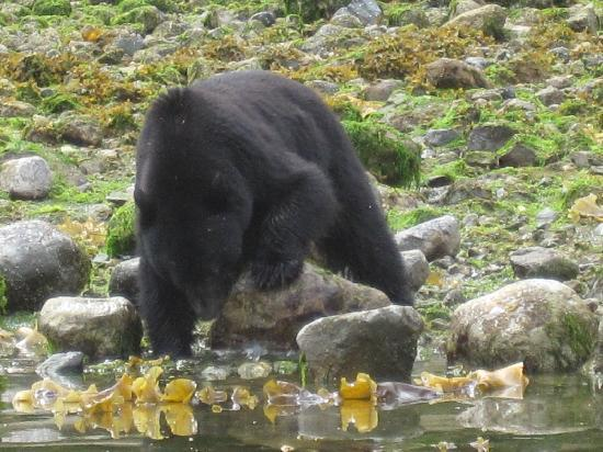 Clayoquot Wilderness Resort: Awesome excursions