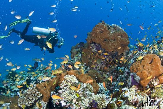 Gangga Divers at Villa Almarik: Local dive site