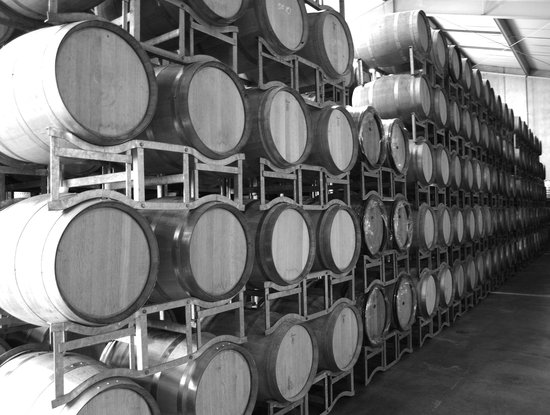 Auckland Wine Trail Tours: Love those Barrels