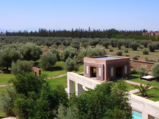 Les Jardins de Kesali: Vue de haut sur la jardin d'oliviers et de plantes aromatiques