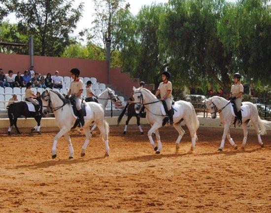 Real Picadeiro : Escola de Equitação