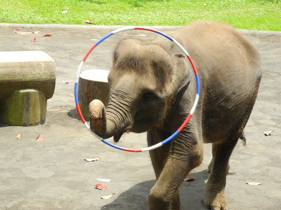Bali Adventure Tours: Going through the hoops!