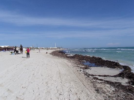 Vincci Helios Beach: algues
