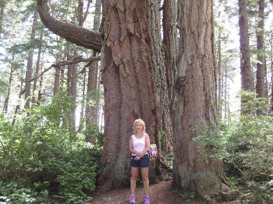 Helliwell Provincial Park: Big trees too!