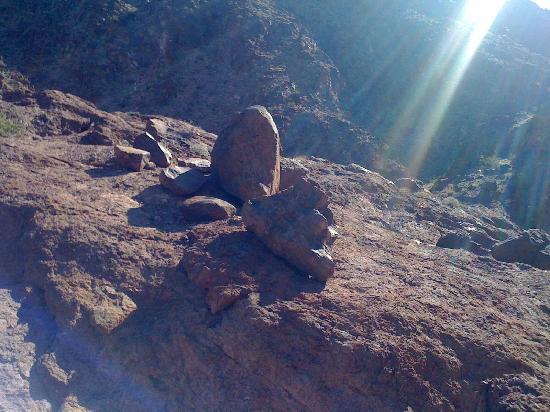 Desert Rats: Majestic