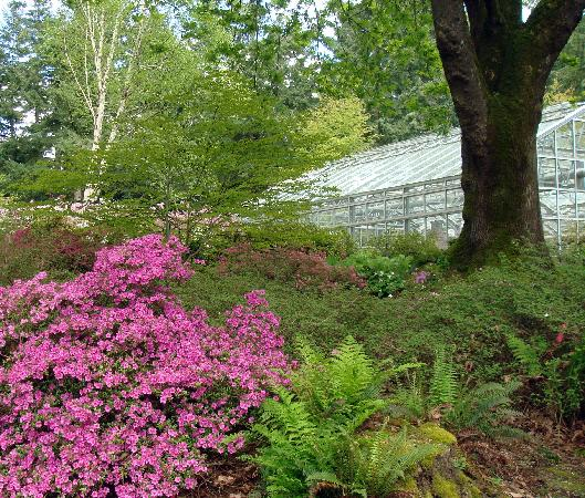 Charmant Rhododendron Species Botanical Garden