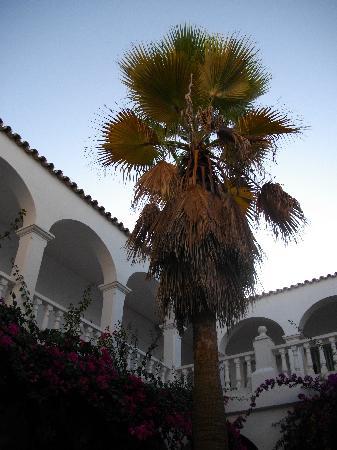 Sotogrande, Ισπανία: la palma al centro del patio interno del ristorante i tavoli sono tutti attorno