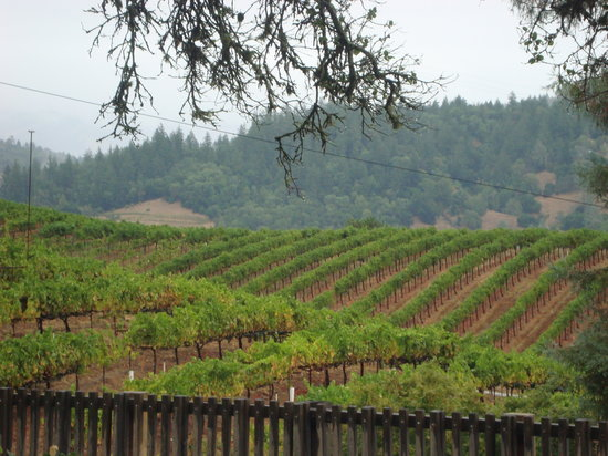 Wine Tours In Napa California August