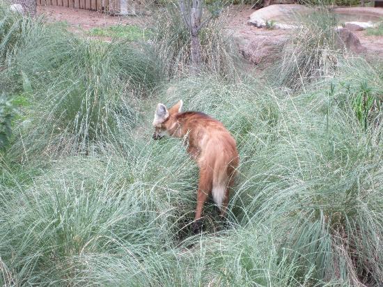 Phoenix Zoo : Fox