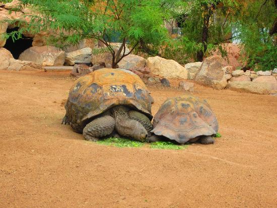 Phoenix Zoo : Turtle