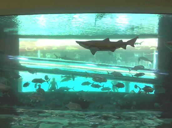 Golden Nugget Hotel: Shark Tank!