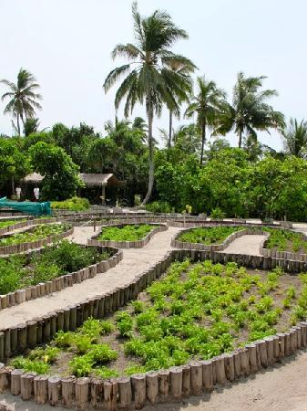 Six Senses Laamu: Island Garden